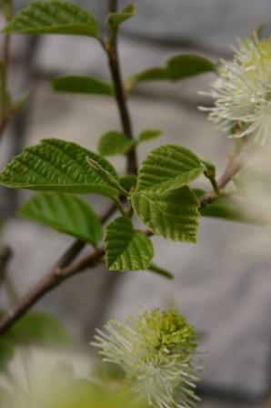 Spring 2009 162