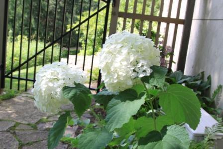 The Garden Buzz: July 2010