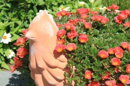 Copy chicken pot moss rose
