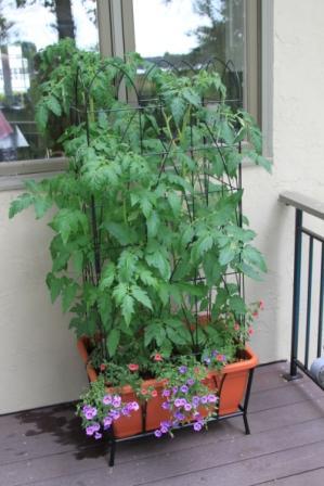 Copy tomato deck