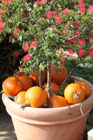 Copy pumpkin mulch