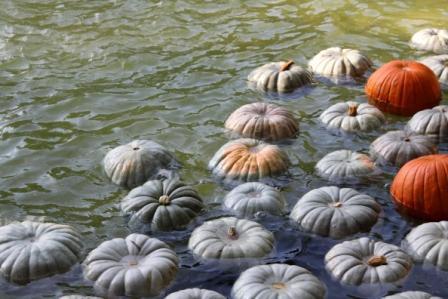 Copy floating pumpkins