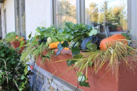 Copy pumpkins in windowbox 2