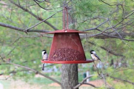 Copy bird feeder 2