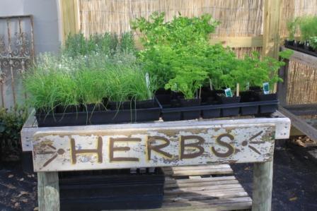 The Garden Buzz: Herbs