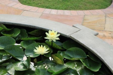 Copy water lily in fountain