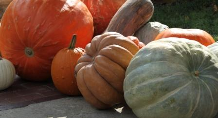Copy pumpkin pile 2