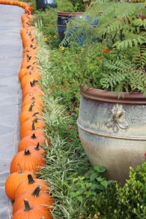 Copy pumpkin edging