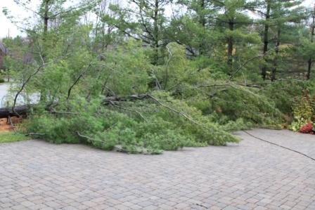 Copy fallen pines