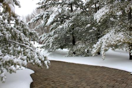 Copy snow laden pines 2
