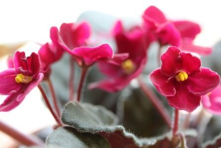 Copy AV flowers