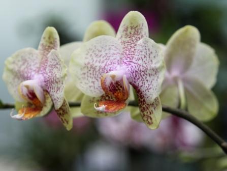 Copy orchids 4