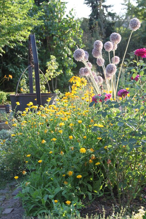 A Little Something About Alliums - The Garden Buzz