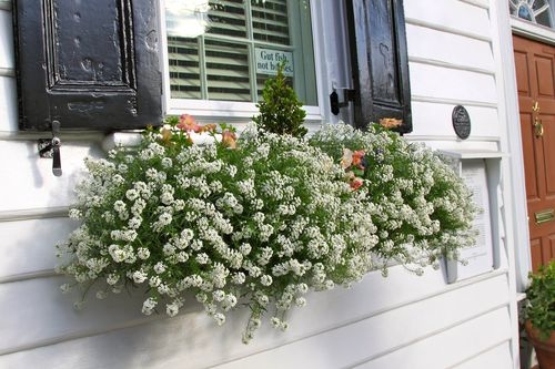 Inspiration For Spring 2012 My Latest Window Box Photos