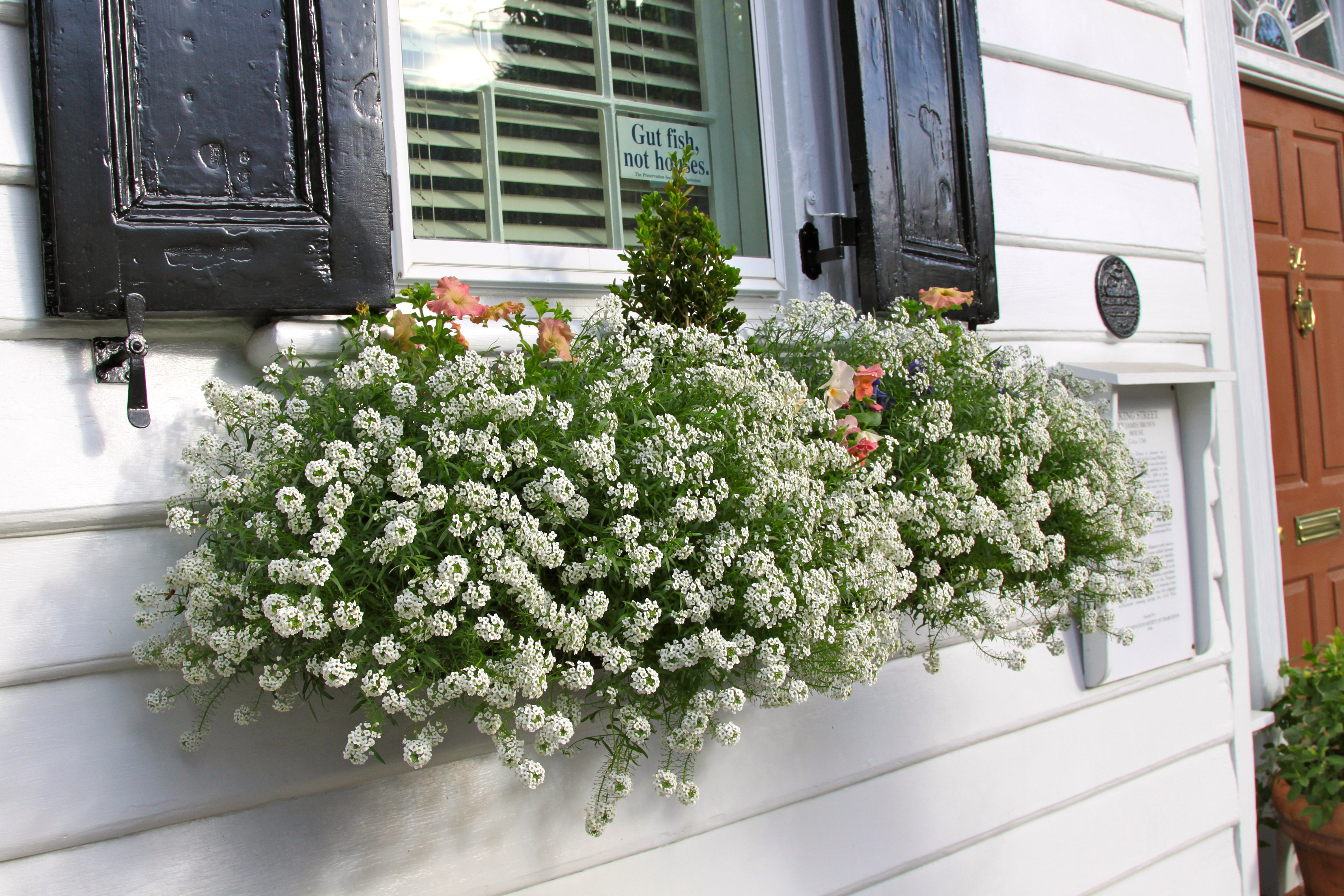 Inspiration for Spring 2012 My Latest Window Box s from