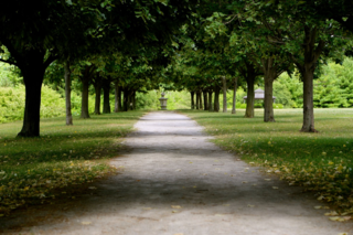 Grand Allee with linden trees