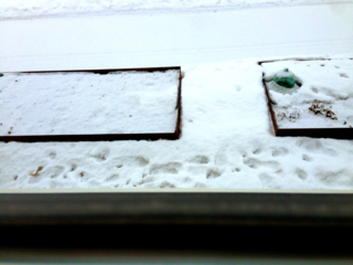 Snow covered raised beds