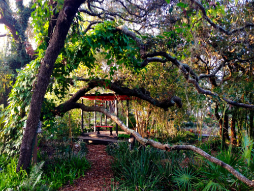 Tea Garden through live oaks, torii gates