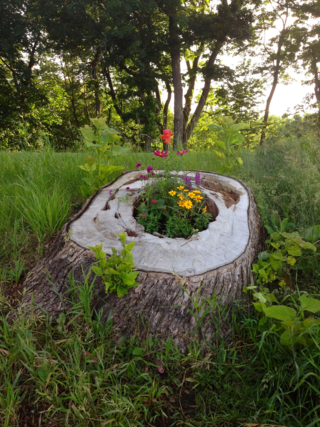 Flowers planted in tree trunk