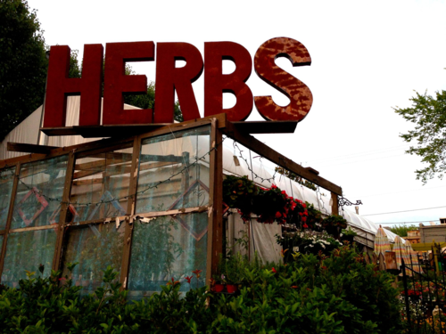 herbs for slae