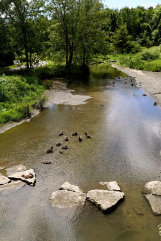 creek with wildflowers