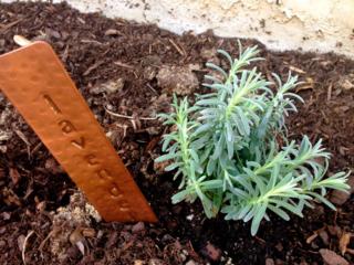 Copper plant marker for lavender