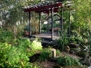 Torii Gates in tea garden