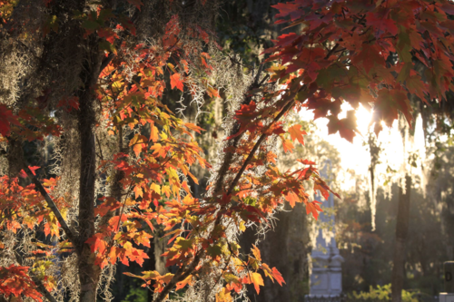 Autumn leaves at Bonaventure Cemetery
