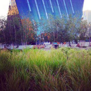 Looking toward Museum of Contemporary Art