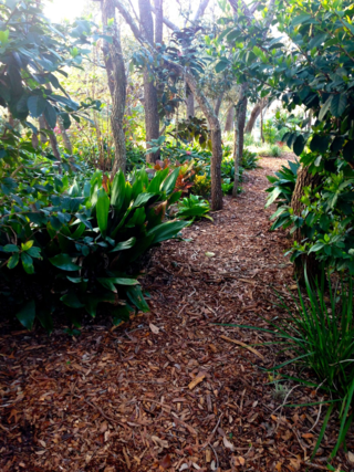 mulched path