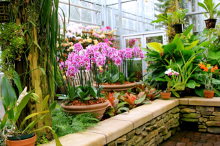 Orchids in Glasshouse Atlanta Botanical Gardens