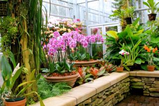 Orchids in Glasshouse Atlanta Botanical Gardens