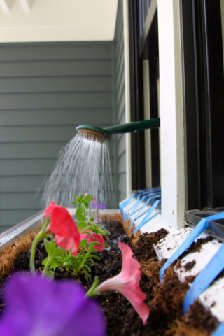 watering window box
