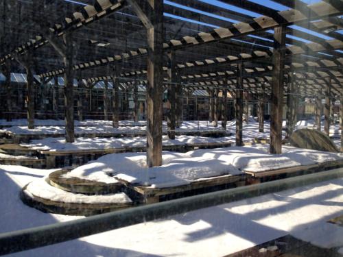 Bachman's Garden Centers in winter