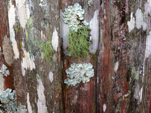Bearded, leafy, scaly lichens