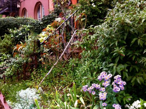 Lush garden in Park Slope Brooklyn