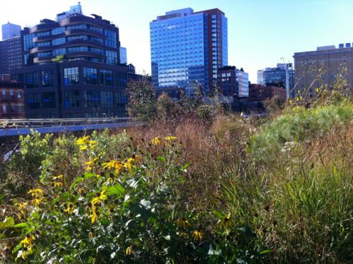 Wildlife habitat in NYC