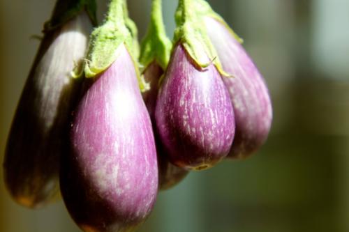 'Fairy Tale' Eggplant, purple, white streaks