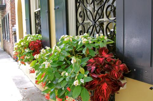 Window box of coleus and begonias