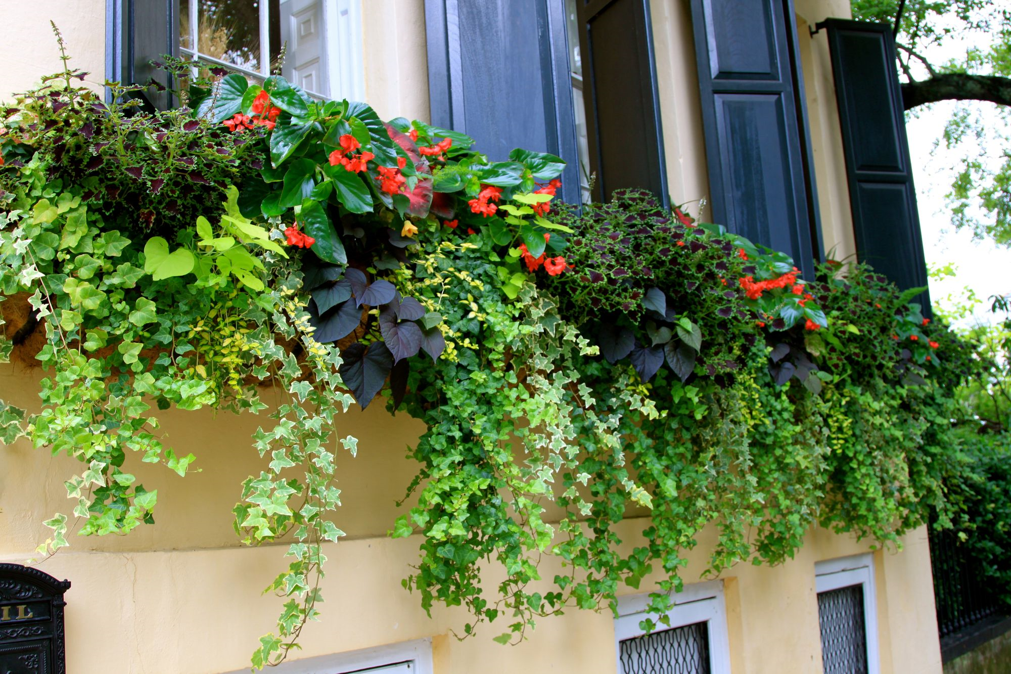 More Window Boxes in Charleston The Garden Buzz