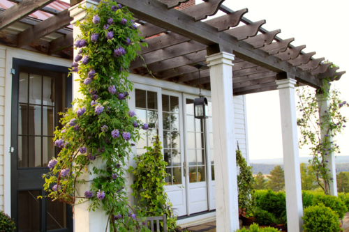 Pergola with wisteria, art studio
