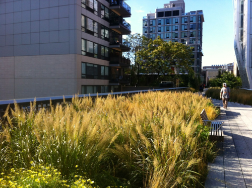 Ornamental grasses blooming on High Line