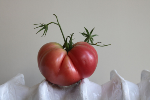 heirloom Brandywine tomato