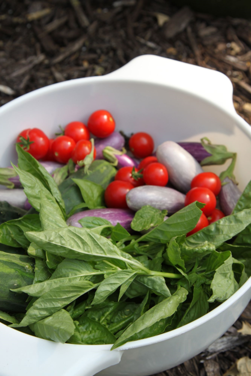 summer harvest basil, tomatoes, eggplant