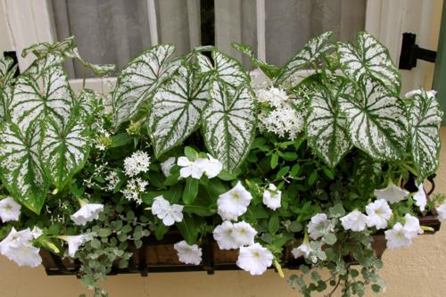 white flower themed window box