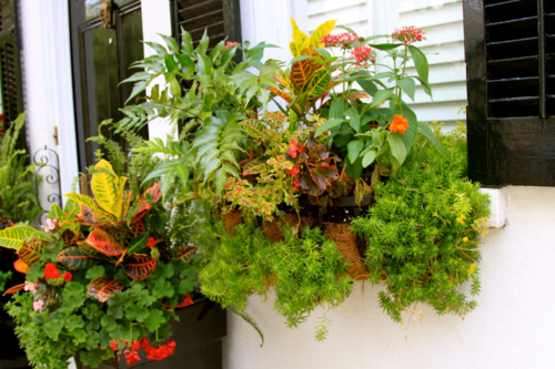 croton, coleus and ferns in Charleston window box