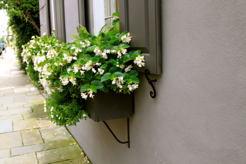 white flowers black shutters