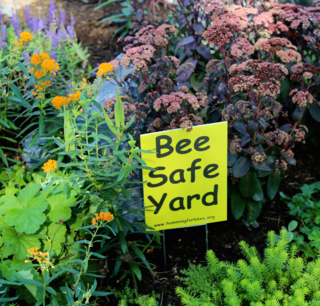 Bee Safe Yard
